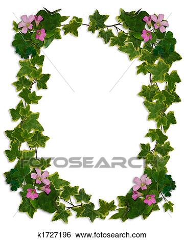 stock illustration of ivy border flowering clover k1727196 search