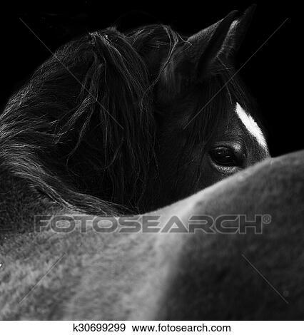 Nahaufnahme Von A Pferd Eye Auf Schwarz Hintergrund