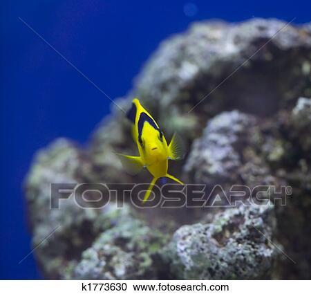Marine Aquarium Fish Tank Stock Image K1773630 Fotosearch