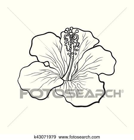 clipart unique rouge clair hibiscus fleur tropicale croquis vecteur illustration. Black Bedroom Furniture Sets. Home Design Ideas