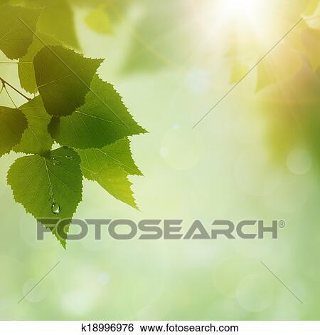Verde Natura Estratto Ambientale Sfondi Per Tuo Disegno