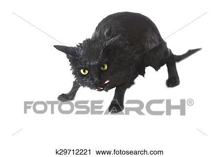 Carino Nero Bagnato Gatto Secondo Uno Bagno Divertente Poco