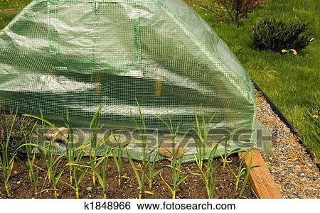Stock Bilder Mini Gewachshaus Von Gardenergardening