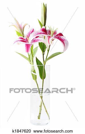 Stock photography of stargazer lilies in vase k1847620 search beautiful pink stargazer lilies in vase on white background mightylinksfo