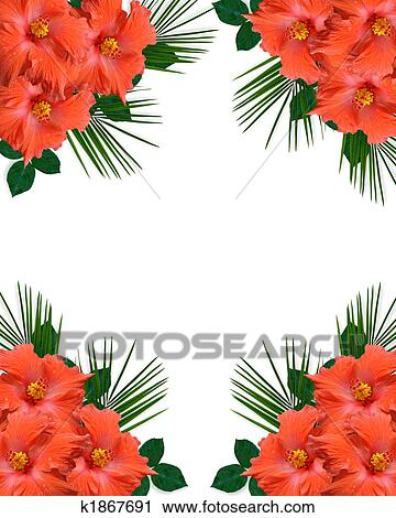 Hibiscus Tropical Flowers Border Clip Art K1867691 Fotosearch