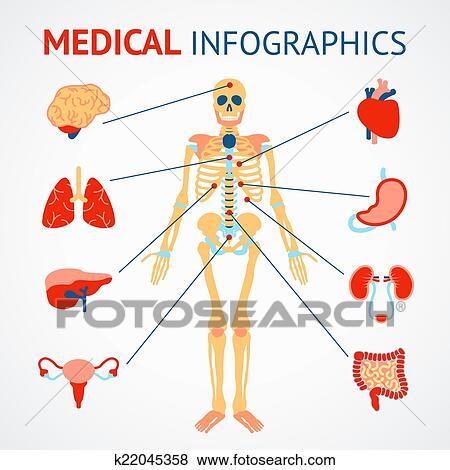 Clip Art - menschlich, organe, infographic k22045358 - Suche Clipart ...