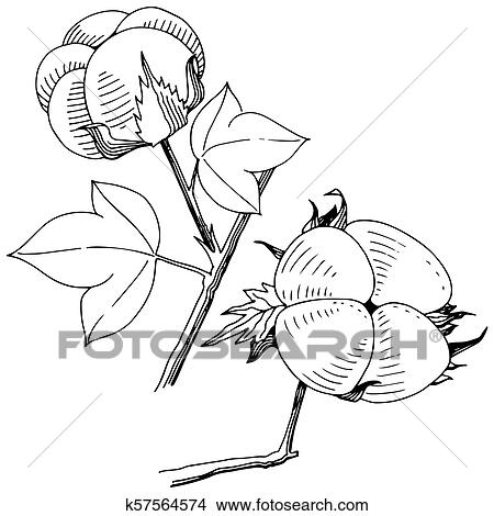 Clipart Of Vector Cotton Floral Botanical Flower Wild Spring Leaf