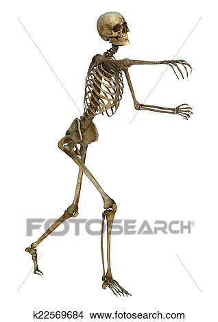 Dibujos - esqueleto humano k22569684 - Buscar Clip Art ...