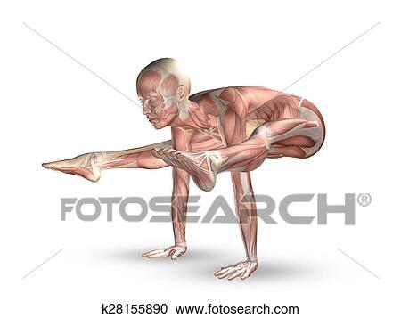 3D figure with muscle map in yoga position Clipart on yoga energy, yoga international, yoga back, yoga stretches, yoga adrenal glands, yoga leg workout, yoga history, yoga skin, yoga peace, yoga anatomy, yoga strength, yoga mind, yoga bones,