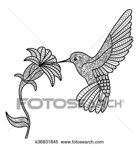 Clipart   kolibri, ausmalbilder, für, erwachsene, vektor k36831845