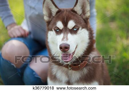 Woman Sitting With Her Husky Dog In Green Park Outdoors Funny Fluffy Mug Blue Eyes