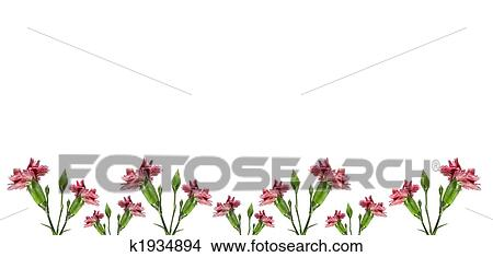 Stock Photo Of Mothers Day Carnation Pink Flowers Background