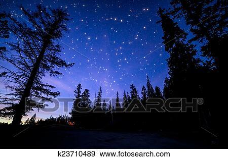 store buy best cheap for sale Ciel bleu, à, beaucoup, scintillement, étoiles, dans, forêt Banque de Photo
