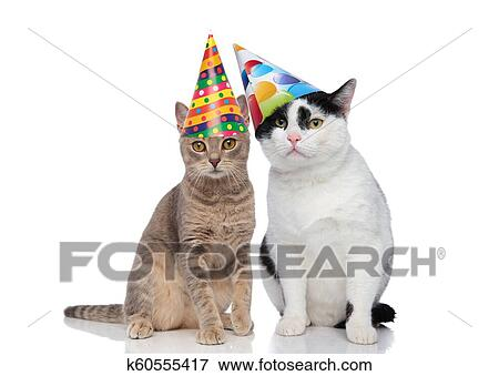 Lovely Cat Couple Wearing Colorful Birthday Hats Stock Photo