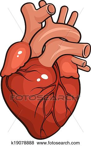 clip art of human heart k19078888 search clipart illustration rh fotosearch com human heart clip art black and white human heart pictures clip art