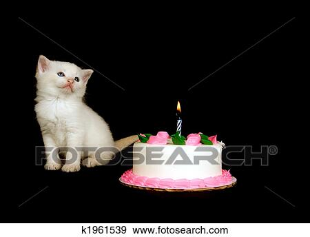 Brilliant White Kitten And Birthday Cake Stock Photo K1961539 Fotosearch Funny Birthday Cards Online Necthendildamsfinfo