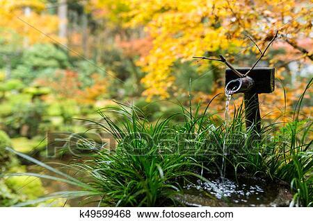 Eau, bambou, fontaine, dans, jardin japonais, à, arbre érable Banque de  Photo