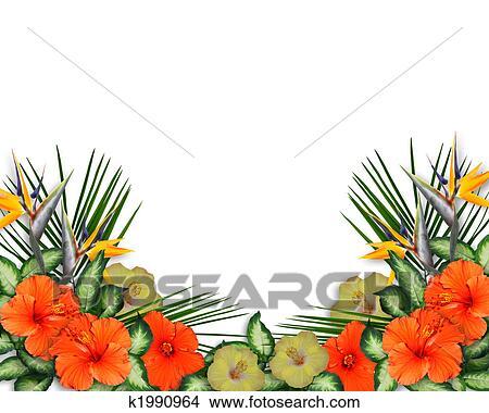 Dessins exotique hibiscus fleurs fronti re k1990964 - Fleur d hibiscus dessin ...