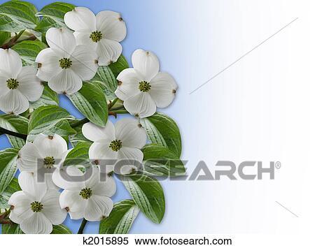 Stock Illustration Of Floral Border Dogwood Blossoms K2015895