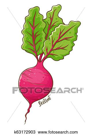 Clip Art Beets Drawing