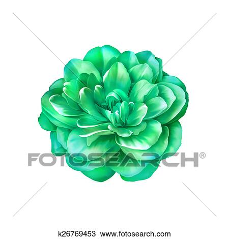 Dessin Beau Clair Vert Rose Camelia Fleur Isole Blanc Fond
