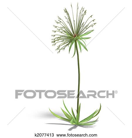 Papyrus Drawing K2077413 Fotosearch