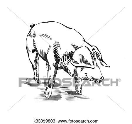 Dessiner un cochon - Comment dessiner un cochon d inde ...