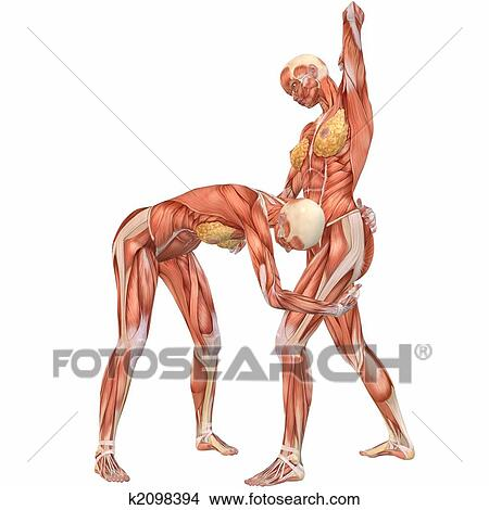 Drawings of Female Human Body Anatomy-Street Fight k2098394 - Search ...