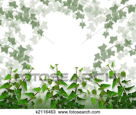 drawing of ivy border background or frame k2116463 search clipart