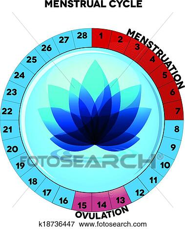Clip art of female menstrual cycle chart k18736447 search clipart