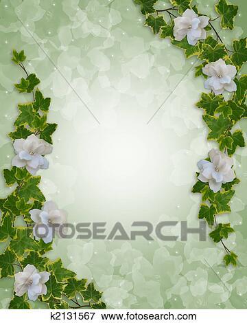 Colección de ilustraciones - frontera floral, hiedra, y, gardenias ...