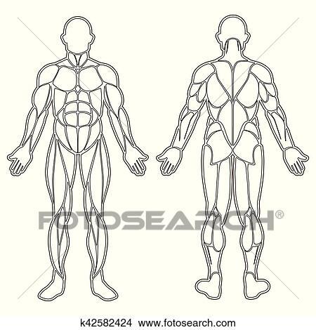 Clipart - menschlicher körper, muskeln, silhouette k42582424 - Suche ...