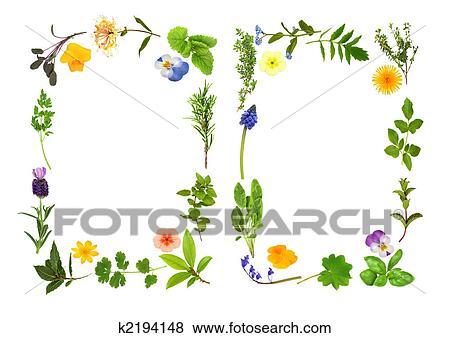 ハーブ そして 花 葉 ボーダー イラスト K2194148 Fotosearch