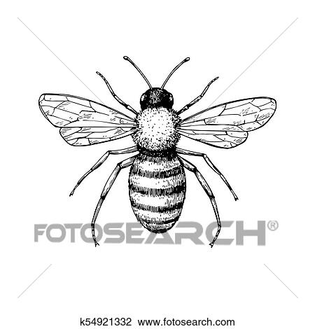 Clipart Of Honey Bee Vintage Vector Drawing Hand Drawn Isolated