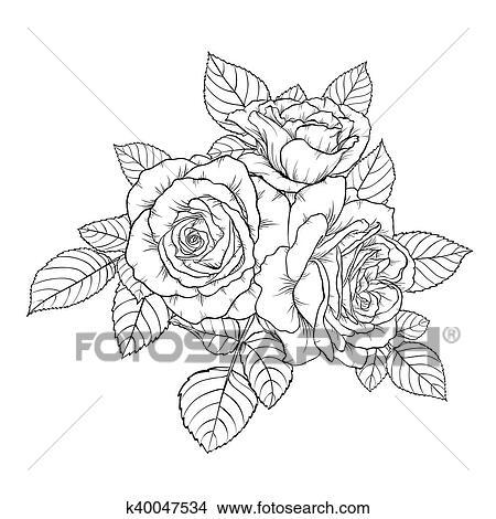 Clipart Beau Monochrome Noir Blanc Bouquet Rose Isole Sur