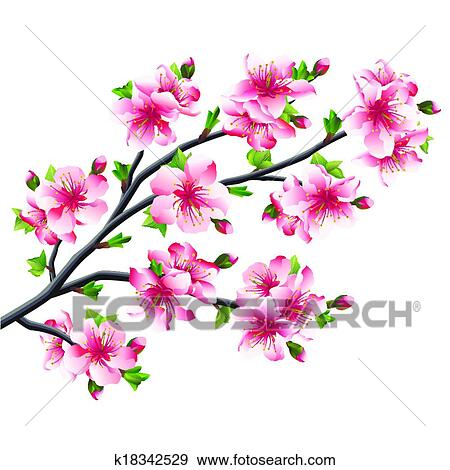 Pink Cherry Blossoms Branch Anese Tree Sakura Isolated On White Background Vector Ilration
