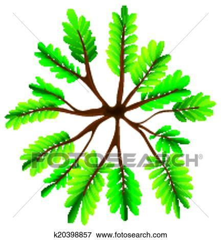 clip art of a topview of a fern plant k20398857 search clipart rh fotosearch com fern clip art free fern plant clipart