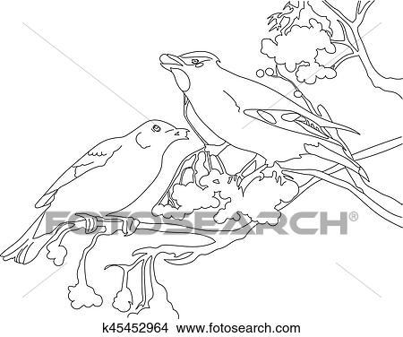 desenhos pássaro contorno k45452964 busca de ilustrações clip