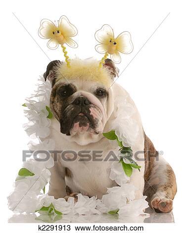 Engels Bulldog Vervelend Plezier Komisch Kostuum Stock