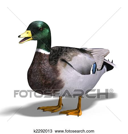 Dessin m le canard colvert k2292013 recherchez des - Illustration canard ...