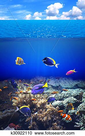 Stock Photography Of Underwater Scene With Tropical Fish K30922110