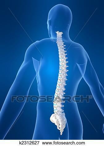 Colección de ilustraciones - espina dorsal humana k2312627 - Buscar ...