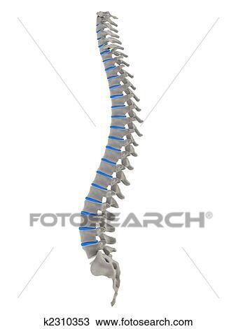 Dibujo - espina dorsal humana k2310353 - Buscar Clip Art ...