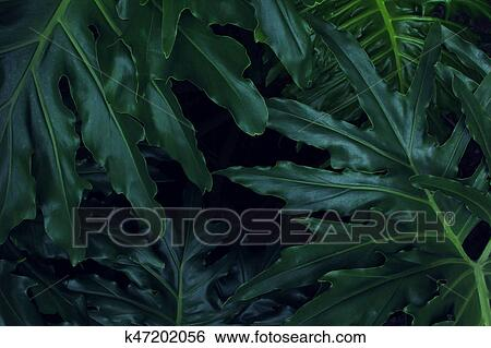 Real Tropical Leaves Background Jungle Foliage Stock Photograph K47202056 Fotosearch Here you can explore hq tropical leaves transparent illustrations, icons and clipart with filter setting like size, type, color etc. fotosearch