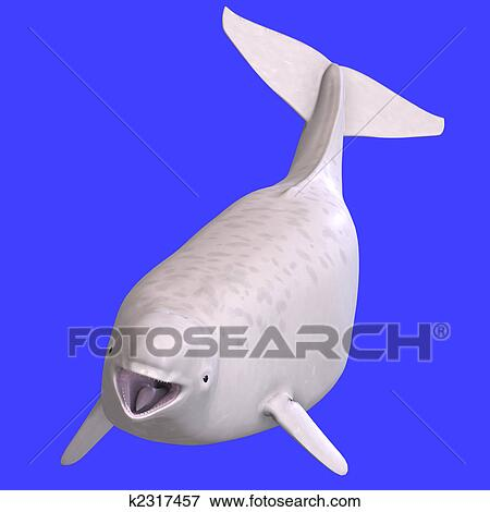 イラスト Whitle Juvenilie シロイルカクジラ K2317457 Eps