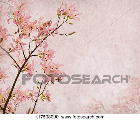 Flowers Of The Silk Floss Tree Chorisia Speciosablossom On Old Antique Vintage Paper Background