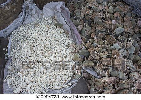 Stock Foto Baobab Frucht K20994723 Suche Stock Fotografien