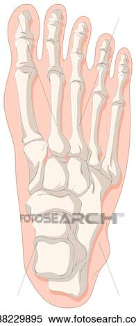 Clipart of Bone x-ray for gout toe k38229895 - Search Clip Art ...