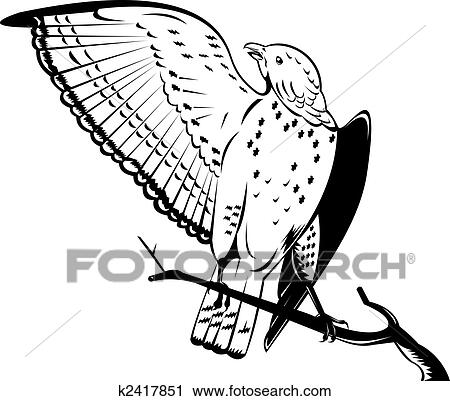 Clipart Of Broad Winged Hawk K2417851