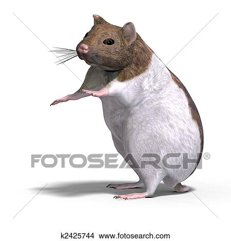 Drawings Of Cute Hamster K2425744 Search Clip Art Illustrations